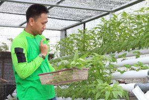 Dompet Dhuafa Riau Panen 'Kebun Pangan' di Rooftop Kantor