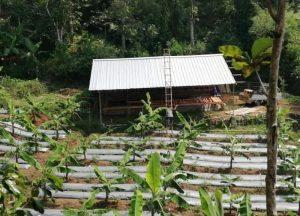Jelang Idul Adha, DT Peduli Sukabumi Siapkan Kandang Penampungan