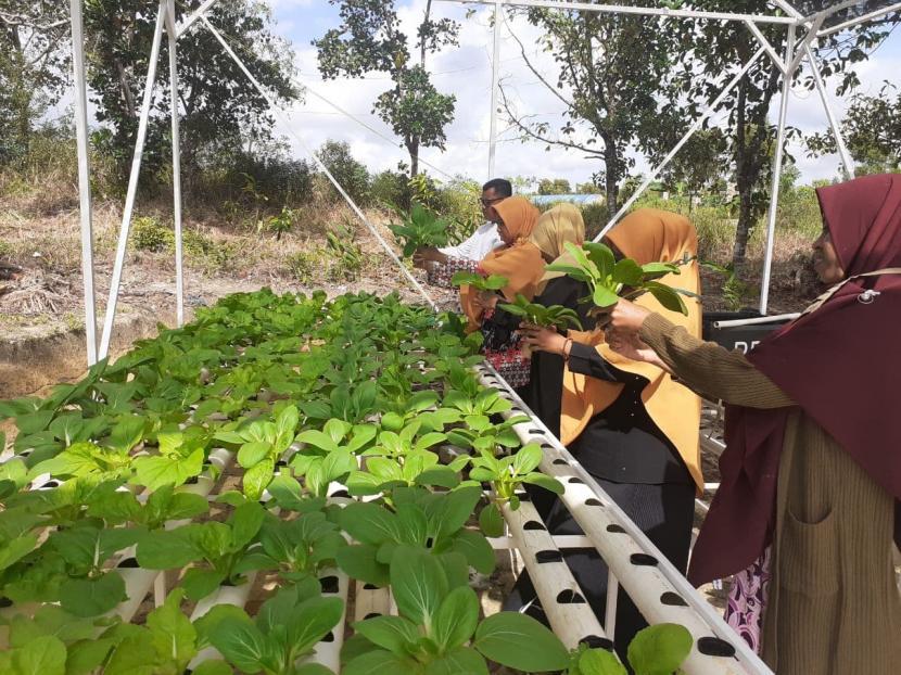 Sekolah Juara Rumah Zakat Batam Panen Perdana Sayuran Hidroponik